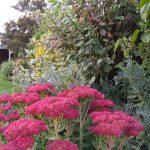 Autumn colours (2)