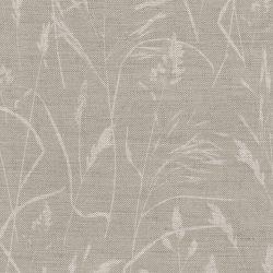 Meadow Grass Dove